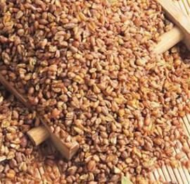 杂粮荞麦微波低温烘焙机