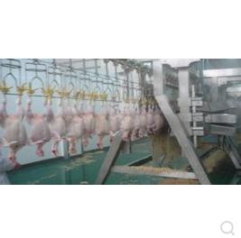 大型家禽屠宰生产线 宰杀 脱毛 掏脏 分割流水线